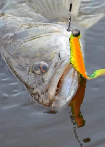 Cannibal łowi zawsze